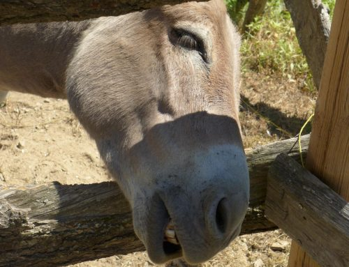 Das Paradoxon von konkurrenzfähigem rentablem Tierwohl …