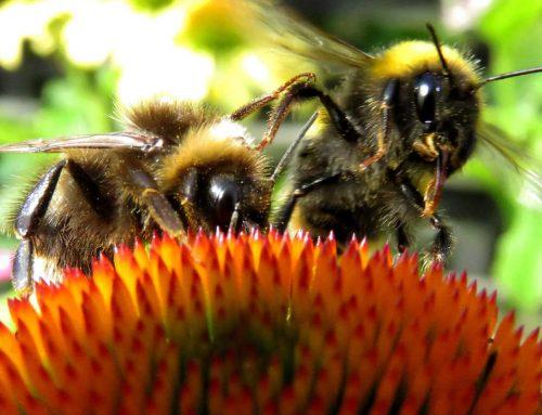 Die Bienen brauchen uns!