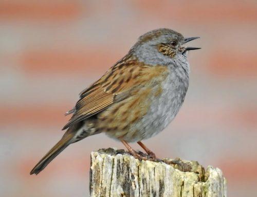 Petition gegen Vögel gefährdende Erntemethoden von Oliven
