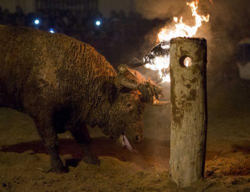 Toro Júbilo oder Toro emboladeo oder Toro de fuego … wie man das auch nennen mag