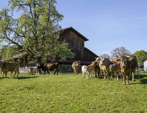 Welchen Stellenwert haben Tiere in der EU? – Ein Interview mit der Europaabgeordneten Tilly Metz