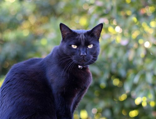 Black Dog/Cat Syndrom