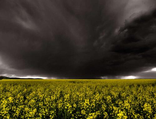 Das Unwetter Desaster 2021 in NRW und RPF
